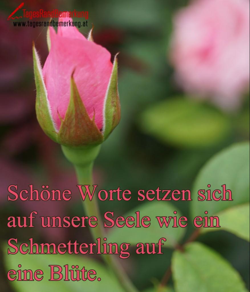 Schöne Worte setzen sich auf unsere Seele wie ein Schmetterling auf eine Blüte.