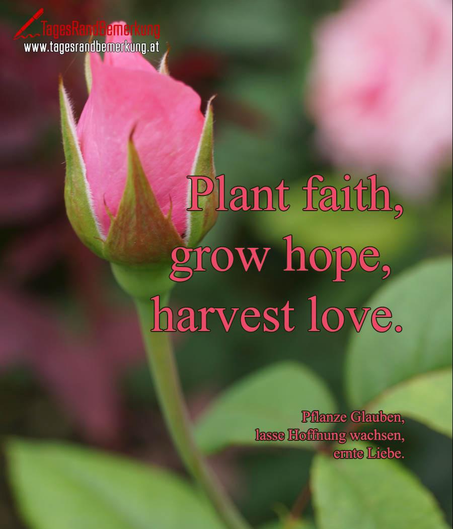 Plant faith, grow hope, harvest love. | Pflanze Glauben, lasse Hoffnung wachsen, ernte Liebe.