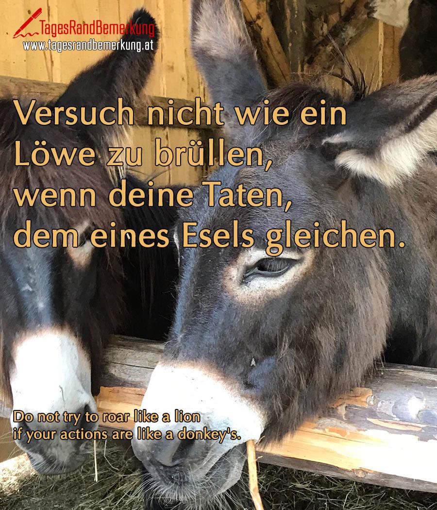 Versuch nicht wie ein Löwe zu brüllen, wenn deine Taten, dem eines Esels gleichen. | Do not try to roar like a lion if your actions are like a donkey's.
